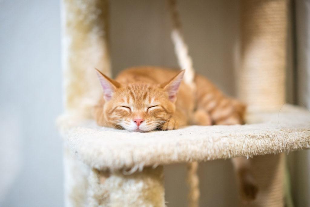 Sleepy Cat, Self-Love, Octavia Brooks, Shamanic Healing, Energy Healing
